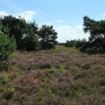 Landschapspark Pauwels