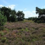 Tilburg investeert in groen